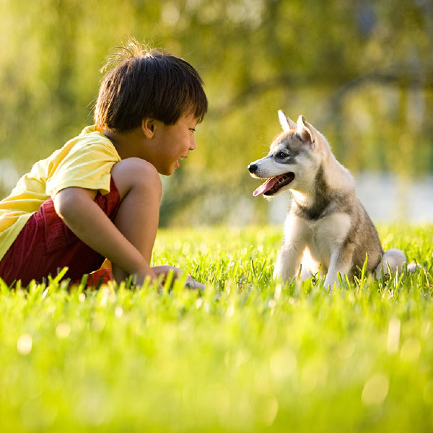 teach kids proper pet care parenting