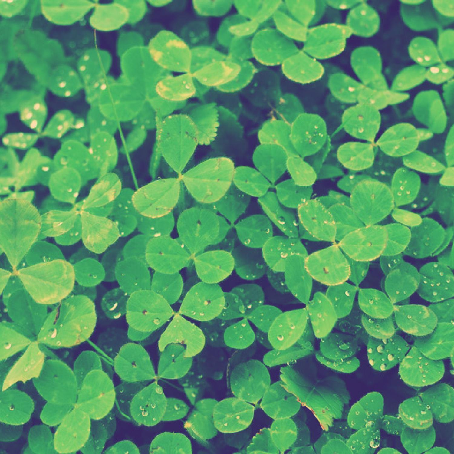 4 fun facts about st patrick u0027s day history parenting