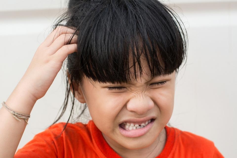stop scratching  head real lice advice