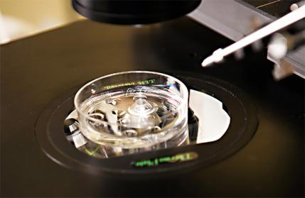 In vitro fertilization, a pricy and controversial process, can guarantee conception of your chosen sex.