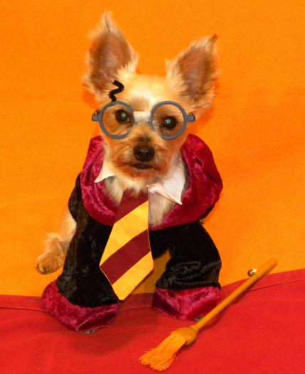 10 Cute Pet Costumes & 10 Cute Pet Costumes | Parenting