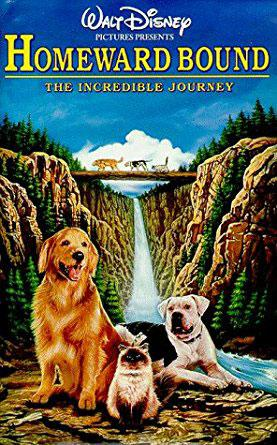 best family movies homeward bound